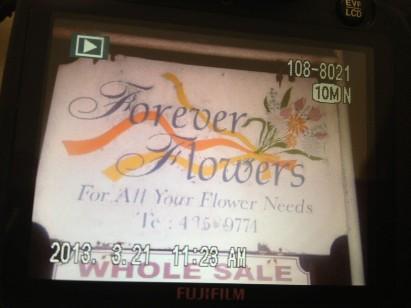 forever flowers image